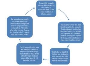 text chart