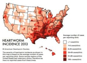 Image - Heartworm Incidence 2013