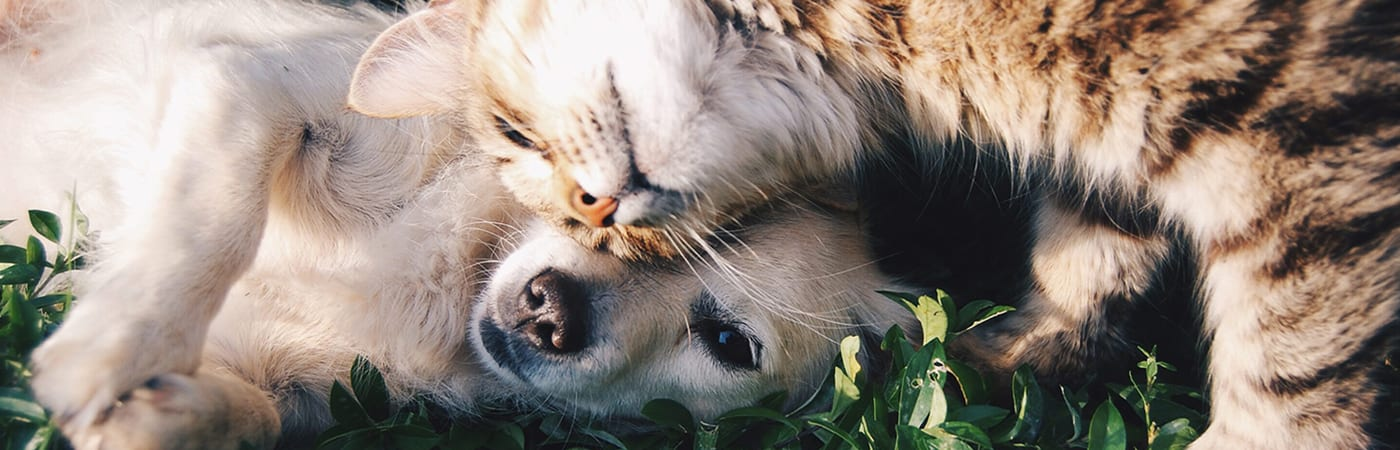 dog and cat snuggling