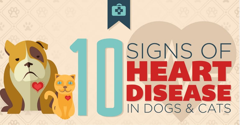 10 signs of heart disease in dogs & cats