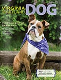 virginia maryland dog summer 2015