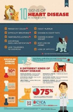 10 Signs of Heart Disease